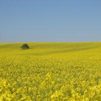 Con bacterias se puede producir biodiesel de forma eficiente y limpia.