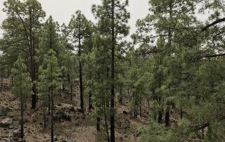 Atención a las consecuencias medioambientales tras un incendio